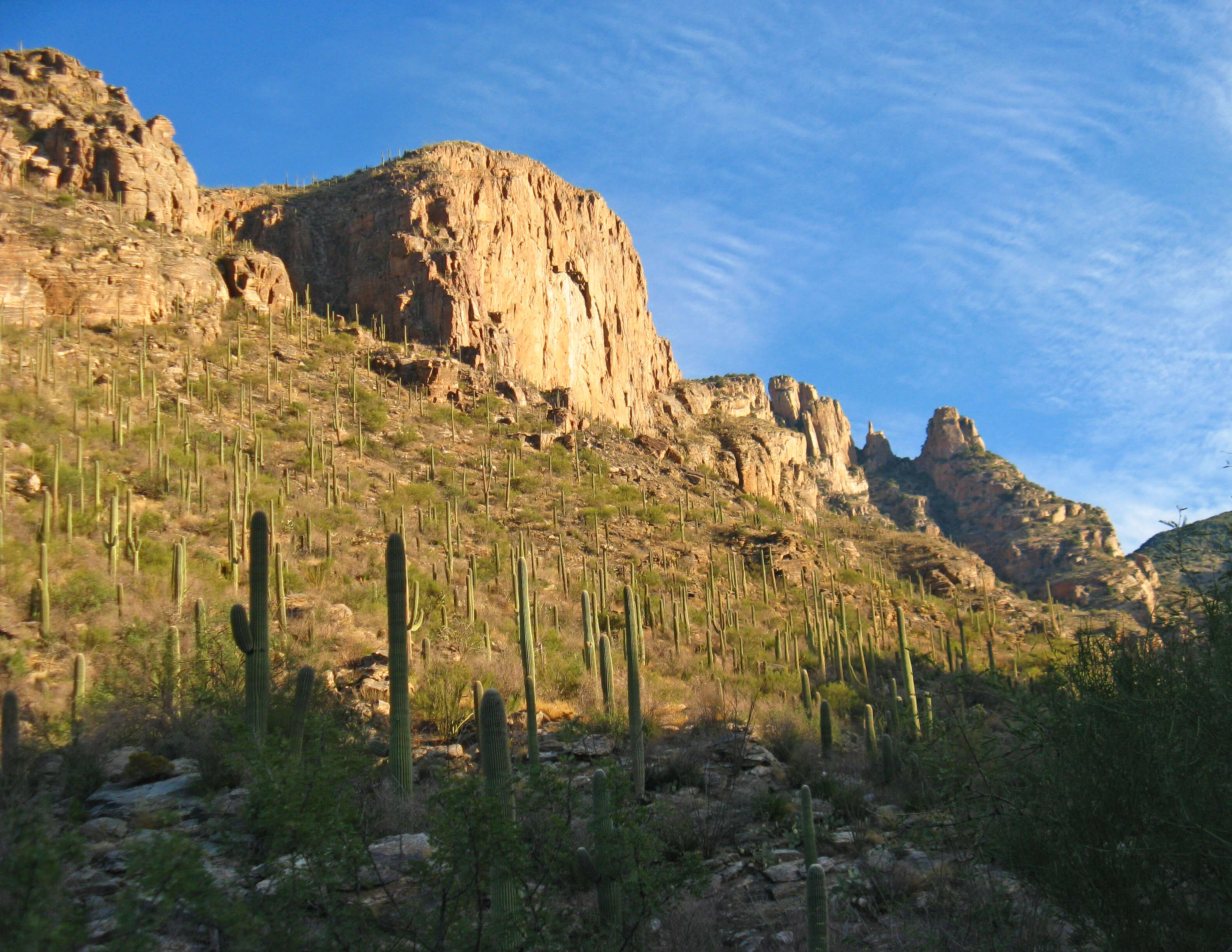 climate change saguaro catus