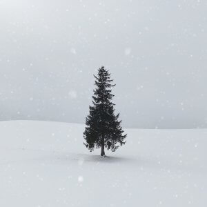 Christmas tree in snow with snow falling all around