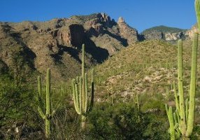 climate change cactus saguaro