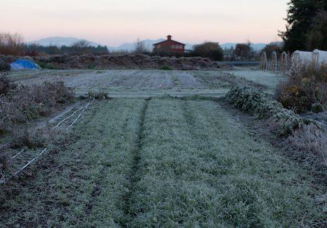 floret winter field flower farm